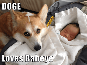 DOGE  Loves Babeye