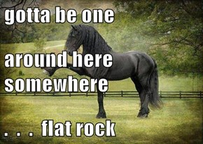 gotta be one around here somewhere .  .  .  flat rock