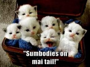 """""""Sumbodies on                                                                         mai tail!"""""""