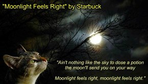 """Moonlight Feels Right"" by Starbuck"