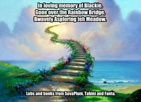 In Memory of Blackie.