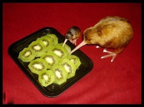 Does This Count as Cannibalism?