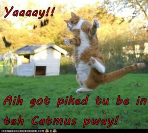 Yaaaay!!  Aih got piked tu be in teh Catmus pway!