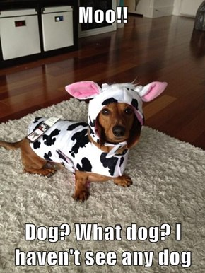 Moo!!  Dog? What dog? I haven't see any dog