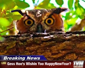Breaking News - Gess Hoo's Wishin Yoo HappyNewYear?