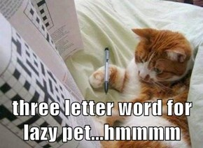 three letter word for lazy pet...hmmmm