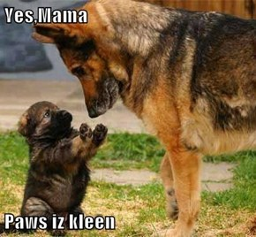 Yes,Mama  Paws iz kleen