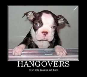 Did Your Dog Party As Hard As You?