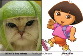 this cat's lime helmet Totally Looks Like Dora's hair