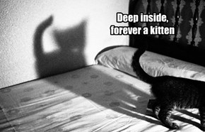 Deep inside,  forever a kitten