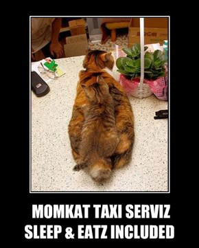 MOMKAT TAXI SERVIZ SLEEP & EATZ INCLUDED