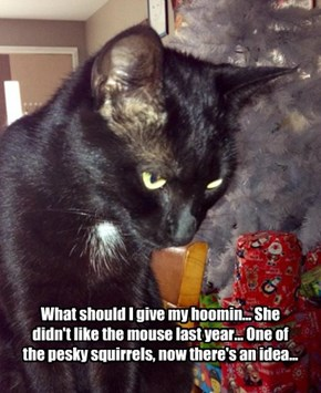 What should I give my hoomin... She didn't like the mouse last year... One of the pesky squirrels, now there's an idea...