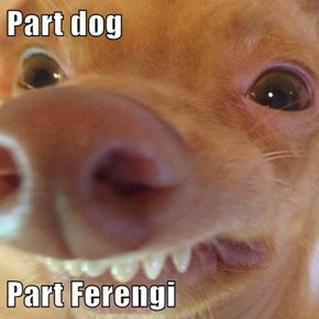 Part dog  Part Ferengi