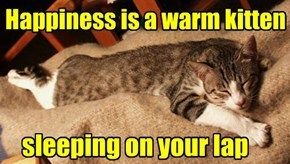 Happiness is a warm kitten