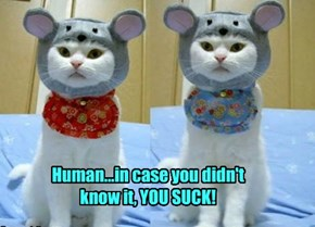 Human...in case you didn't know it, YOU SUCK!