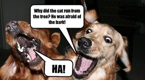 Dogs LOVE cat jokes.