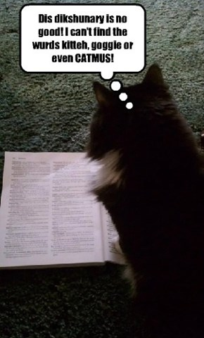 My cat learned to read on-line at LOLCat University.