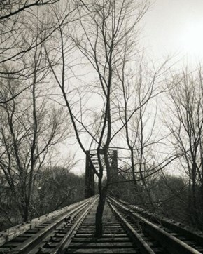 The Branch Line