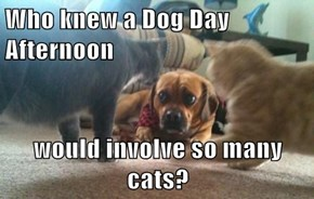 Who knew a Dog Day Afternoon  would involve so many cats?