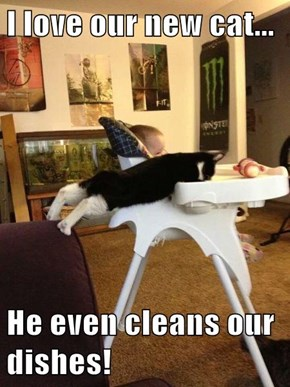 I love our new cat...  He even cleans our dishes!