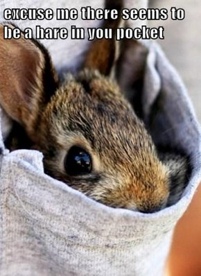 excuse me there seems to be a hare in you pocket