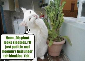 Sleepie pointie plant.