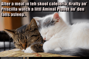 After a meal in teh skool cafeteria, Krafty an' Priscilla watch a littl Aminal Planet an' den falls asleep..