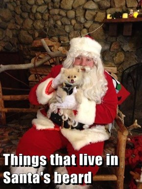 Things that live in Santa's beard