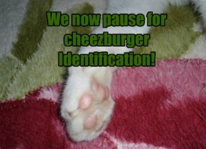 We now pause for cheezburger Identification!