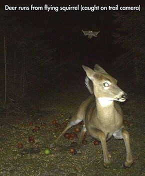 Can't a Deer Eat an Apple in Peace?!