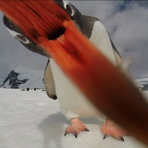 This is the Last Thing You See Before a Penguin Eats You
