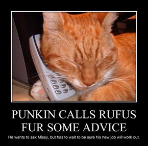 PUNKIN CALLS RUFUS FUR SOME ADVICE
