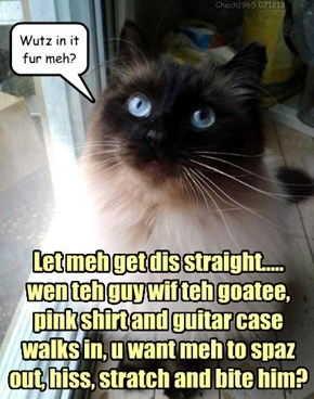 Let meh get dis straight..... wen teh guy wif teh goatee,  pink shirt and guitar case walks in, u want meh to spaz out, hiss, stratch and bite him?