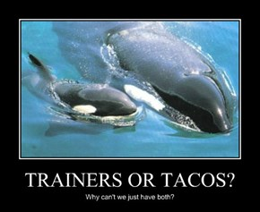 TRAINERS OR TACOS?