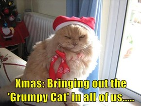 Xmas: Bringing out the 'Grumpy Cat' in all of us.....