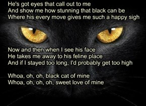 """Black Cat of Mine"" TTO ""Sweet Child of Mine"" by Guns N'Roses"