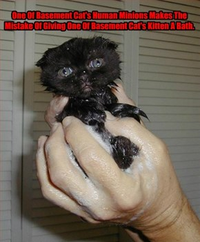 One Of Basement Cat's Human Minions Makes The Mistake Of Giving One Of Basement Cat's Kitten A Bath.