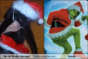 My cat Blackie Midnight Totally Looks Like Grinch