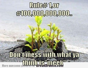 "Rule# 1,or #100,000,000,000..  Don't mess with what ya think is""meek"""