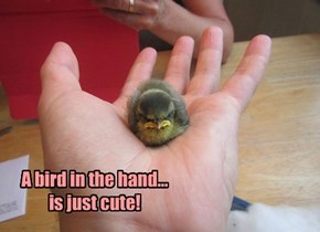 A bird in the hand...is just cute!