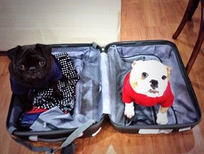 You're Not Going Anywhere Without Us!