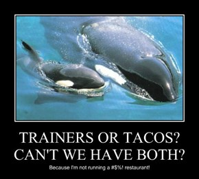 TRAINERS OR TACOS? CAN'T WE HAVE BOTH?