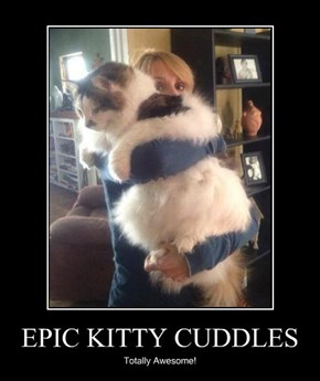 EPIC KITTY CUDDLES