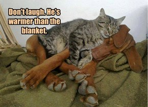 Don't laugh. He's warmer than the blanket.