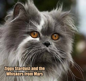 Ziggy Stardust and the Whiskers from Mars