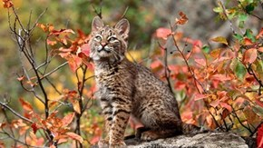 10 Animals of Autumn