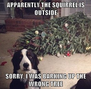 APPARENTLY THE SQUIRREL IS OUTSIDE  SORRY, I WAS BARKING UP THE WRONG TREE