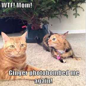 WTF! Mom!   Ginger photobombed me again!