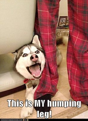 This is MY humping leg!