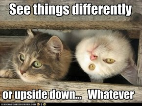 See things differently